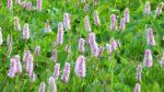 30. Juni -- Glaubenbielen - Höch Gumme - Turre